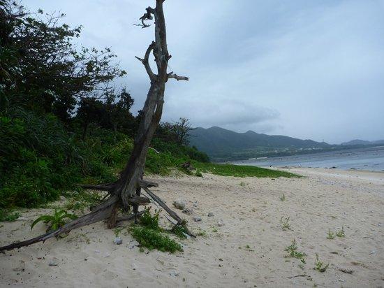 Yonehara Beach: 米原ビーチ シャワー