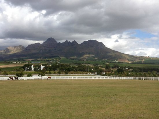 Equus Restaurant at Cavalli Stud and Wine Farm : View from stables