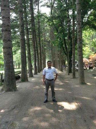 Nami Island: objek photo favorit