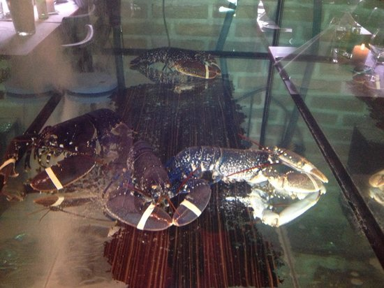 Ristorante Italiano : Lovely fresh lobsters