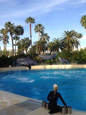 The Mirage Hotel & Casino: Mirage Las Vegas Pool March 2014