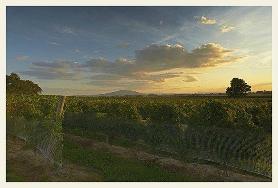 Winnica Adoria
