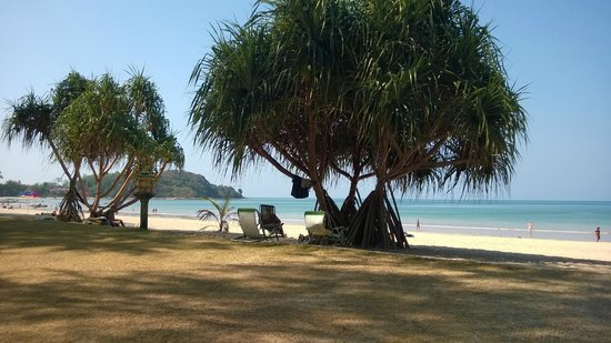 Khlong Dao Beach Bungalow : Beach in front of bungalows