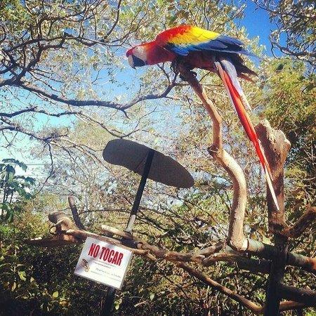 Refugio Herpetologico de Costa Rica: no tocar