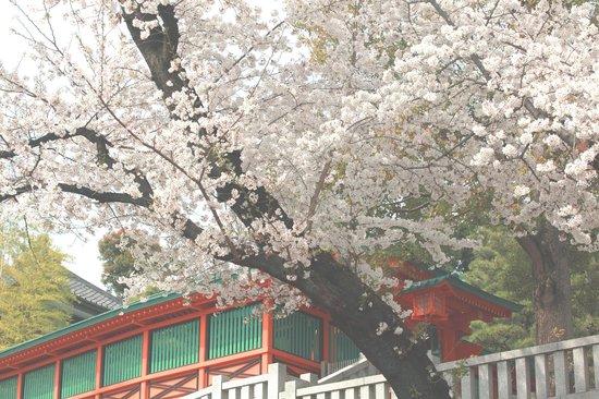 Anahachimangu : 朱色の塀と桜が美しい