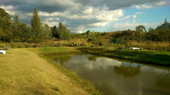 Moof Africa Organic Hostel / Camp: The fish pond!