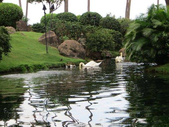 Hyatt Regency Maui Resort and Spa : swans, duck, flamingos, birds etc to watch
