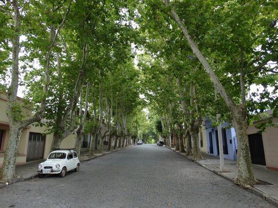 Posada Las Terrazas: Vista da Rua