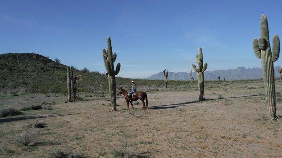 KOLI Equestrian Center: up close to tall cactus
