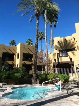 The Wigwam : Many healthy palm trees throughout property