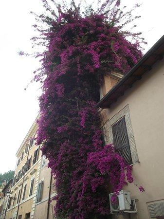 Bouganville, bastante comum nas casas residenciais do bairro Trastevere.