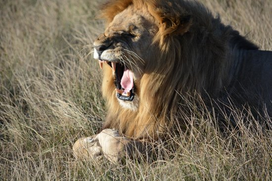 Shamwari Game Reserve Lodges : Awesome!