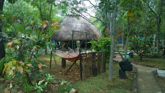 Victoria Falls Backpackers: Visão geral do Hostel