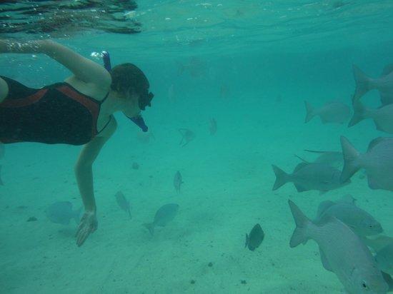 Wyndham Reef Resort: Fantastic snorkelling!