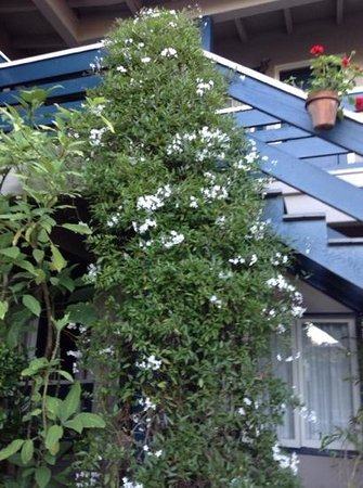 Carmel Wayfarer Inn : jardim