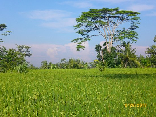 Villa Agung Khalia: View of the Fields