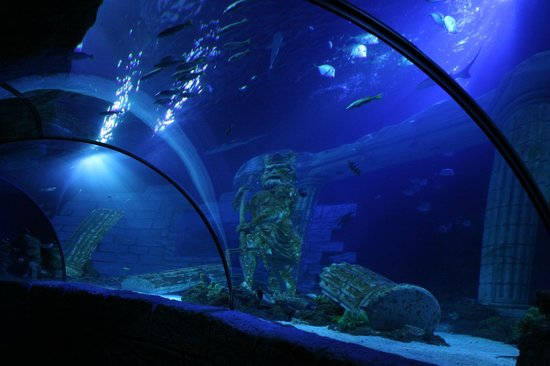 SEA LIFE Porto : First underwater tunnel in the country