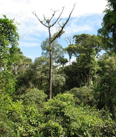 Rain Forest Aerial Trams : Top of the Jungle