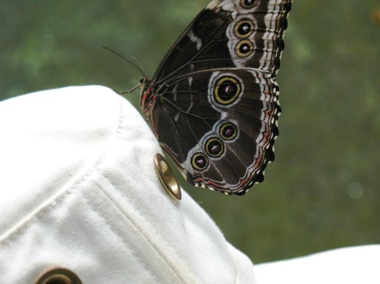 Rain Forest Aerial Trams : Butterfly