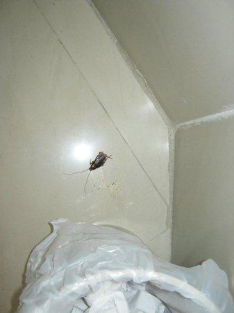Cartagena Premium Hotel: cucarachas en la habitación