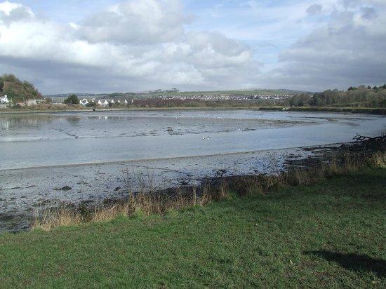 Saltram Gardens (National Trust) : River Plym foreshore