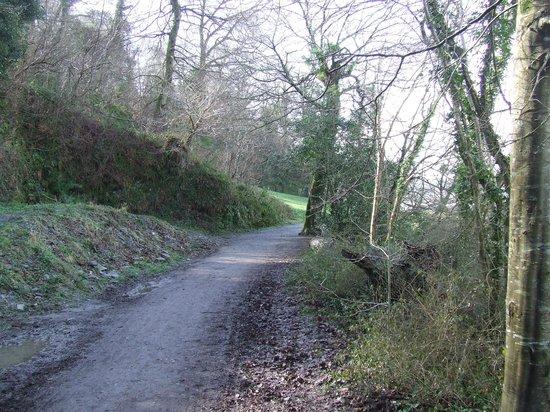 Saltram Gardens (National Trust): Woodland walks