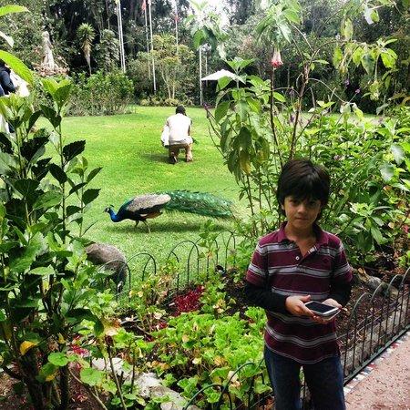 La Mirage Garden Hotel & Spa: Vista de los jardines