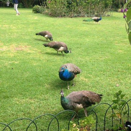 La Mirage Garden Hotel & Spa: jardines al lado del desayunador