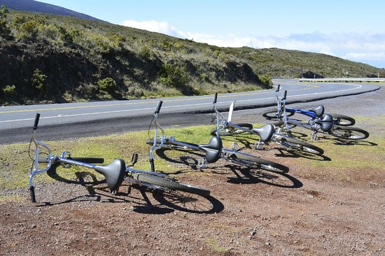 Maui Mountain Cruisers: bikes lined up and ready to go