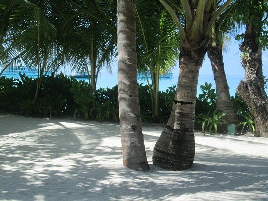 Kuramathi Island Resort: vista dal nostro tavolino