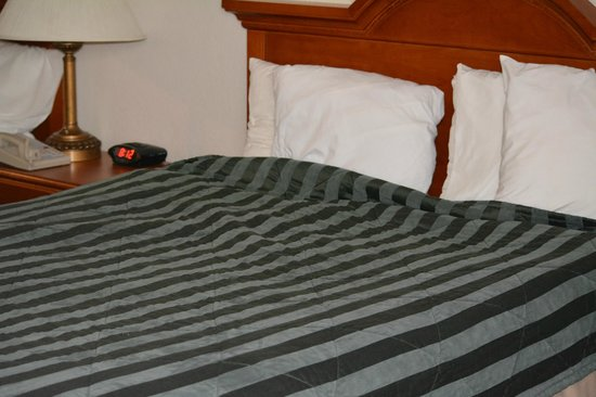 Quality Inn & Suites Redwood Coast: comfy clean bed