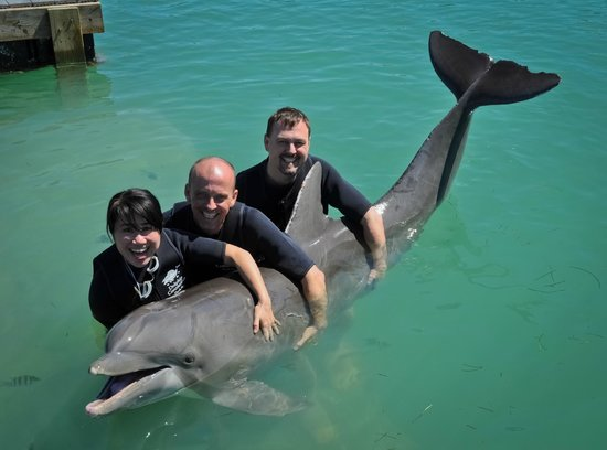 Dolphin Connection: Standard pose - everyone gets to 'hug' the dolphin and they'll sell you the picture.
