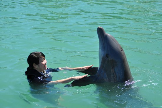 Dolphin Connection: The 'Handshake.'