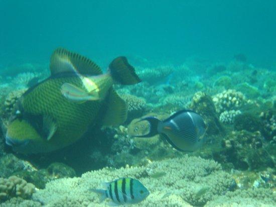 Otium Hotel Amphoras: Подводный мир