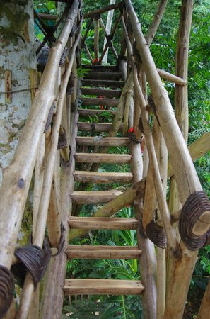 Dominican Tree House Village: Stairs To The Tall Treehouse