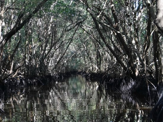 Everglades National Park Boat Tours: Mangrove tunnel