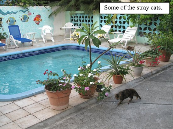 Turquoise Shell Inn: Stray cats around the pool