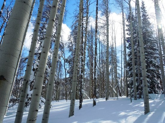Snow Mountain Ranch: Along the snowshoe trail