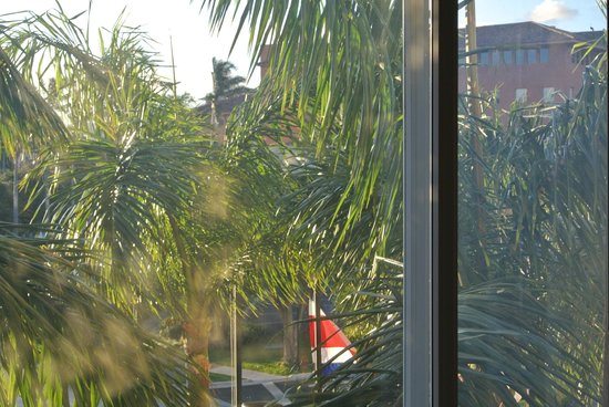 Real InterContinental Costa Rica at Multiplaza Mall : Obstructed view from 209. We could see the parrots in palms.