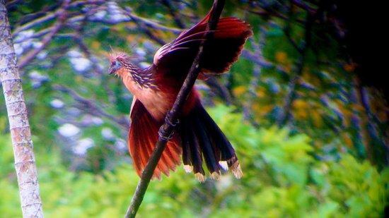 Manatee Amazon Explorer: Stinkey Turkey