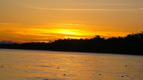 Manatee Amazon Explorer: Lovely Sunset