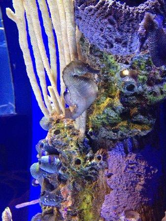 Newport Aquarium : Sea Horse