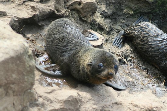 Awesome Tours: Baby fur seal