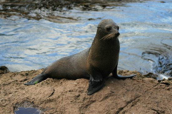 Awesome Tours: Mama seal