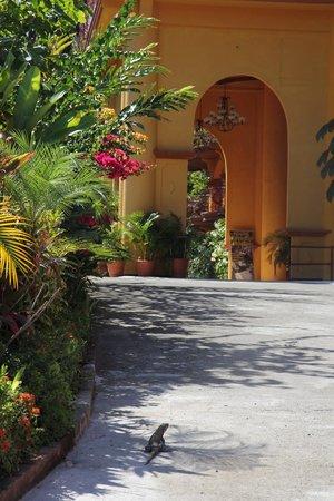 Hotel San Bada : Iguana shows us to our room