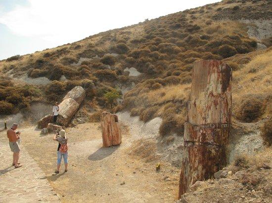 Petrified Forest of Lesbos : Окаменевшие стволы секвой на склоне вулкана