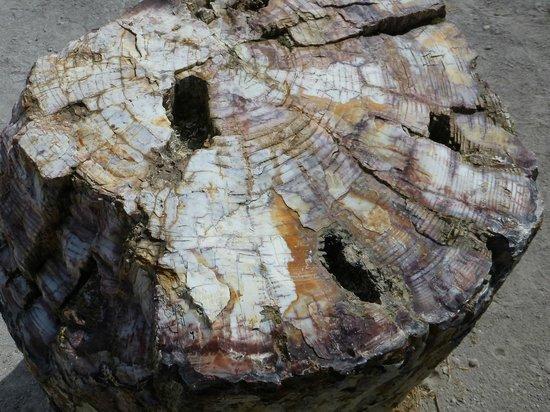 Petrified Forest of Lesbos : Окаменевшая древесина сохранила свою структуру