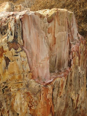 Petrified Forest of Lesbos : Окаменевшая древесина секвойи