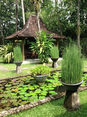 d'Omah Hotel Yogyakarta: Vue depuis la terrasse de la chambre