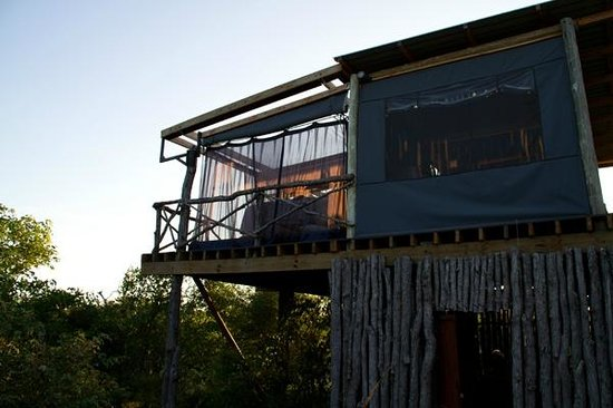 Motswari Private Game Reserve: Giraffes nest